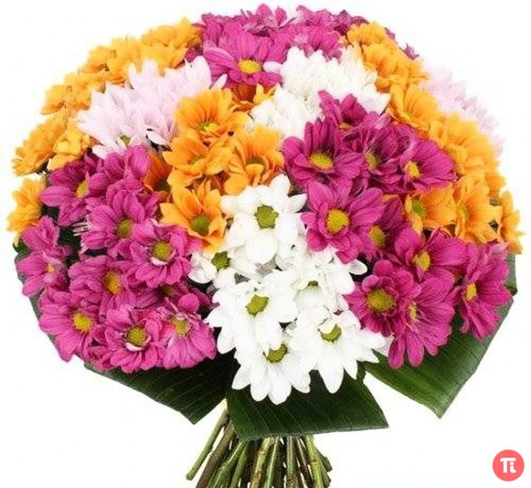 Картинки хризантем букеты, своими руками марта
